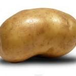 patates kürü